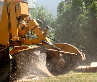 Arborists Plus Tree Experts Stump Grinding